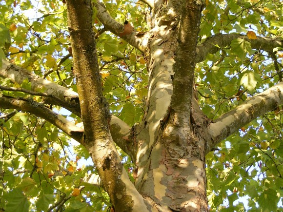 plane-tree-511483_1920