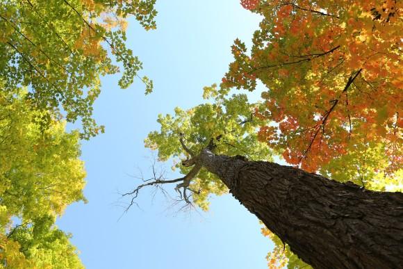 tree-498448_1920