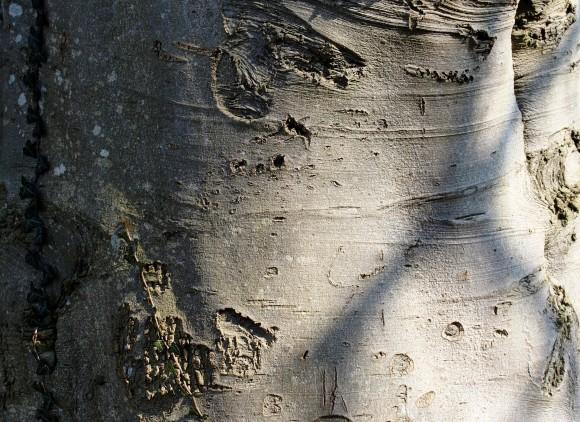 tree-687557_1920