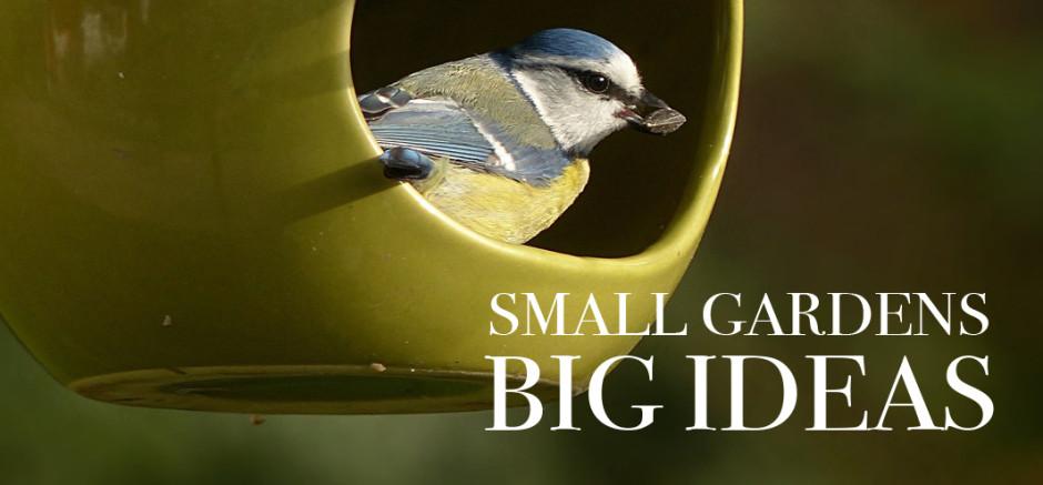 Small Gardens, Big Ideas