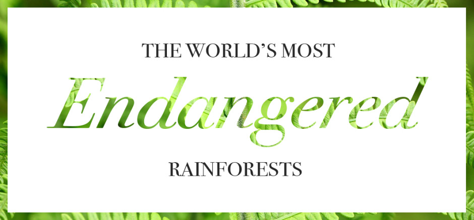 The world's most endangered rainforests | Wooden Blinds Direct | Be Eco-friendly
