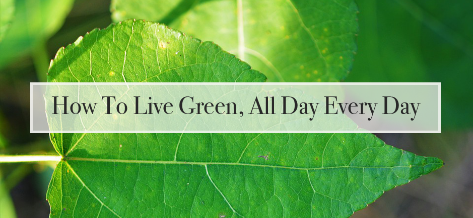 How to live green all day every day